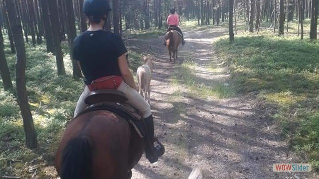 riding in forest